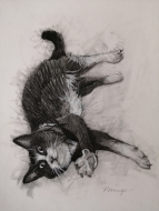 Lazy kitty (2021), Pencil on Paper, 9 x 7 inches, $100