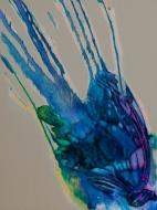 """Winged Blue"""